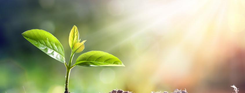santé : les bienfaits des plantes